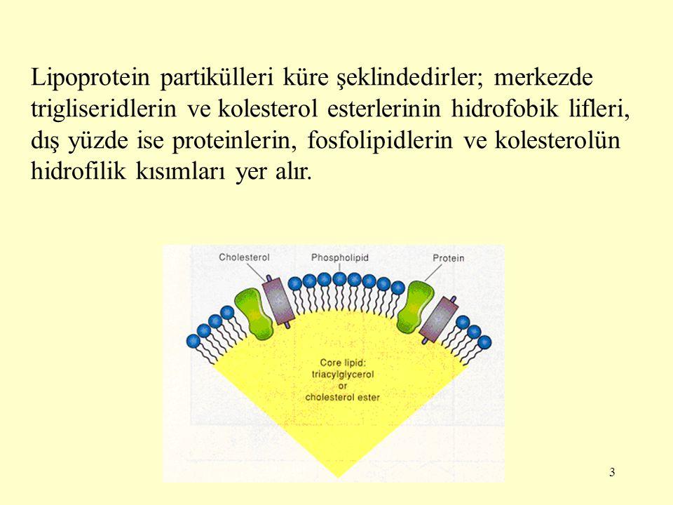 3 Lipoprotein partikülleri küre şeklindedirler; merkezde trigliseridlerin ve kolesterol esterlerinin hidrofobik lifleri, dış yüzde ise proteinlerin, fosfolipidlerin ve kolesterolün hidrofilik kısımları yer alır.