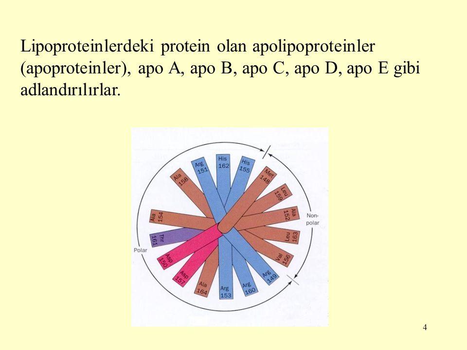 4 Lipoproteinlerdeki protein olan apolipoproteinler (apoproteinler), apo A, apo B, apo C, apo D, apo E gibi adlandırılırlar.