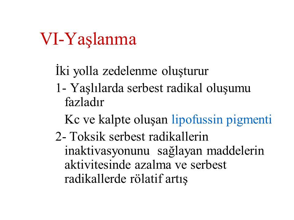 V- İmmünolojik reaksiyonlar İmmün sistem vücudun savunmasına yardım etmekle birlikte  İmmün reaksiyonlar hücre zedelenmesine sebep o.b Anaflaktik rea