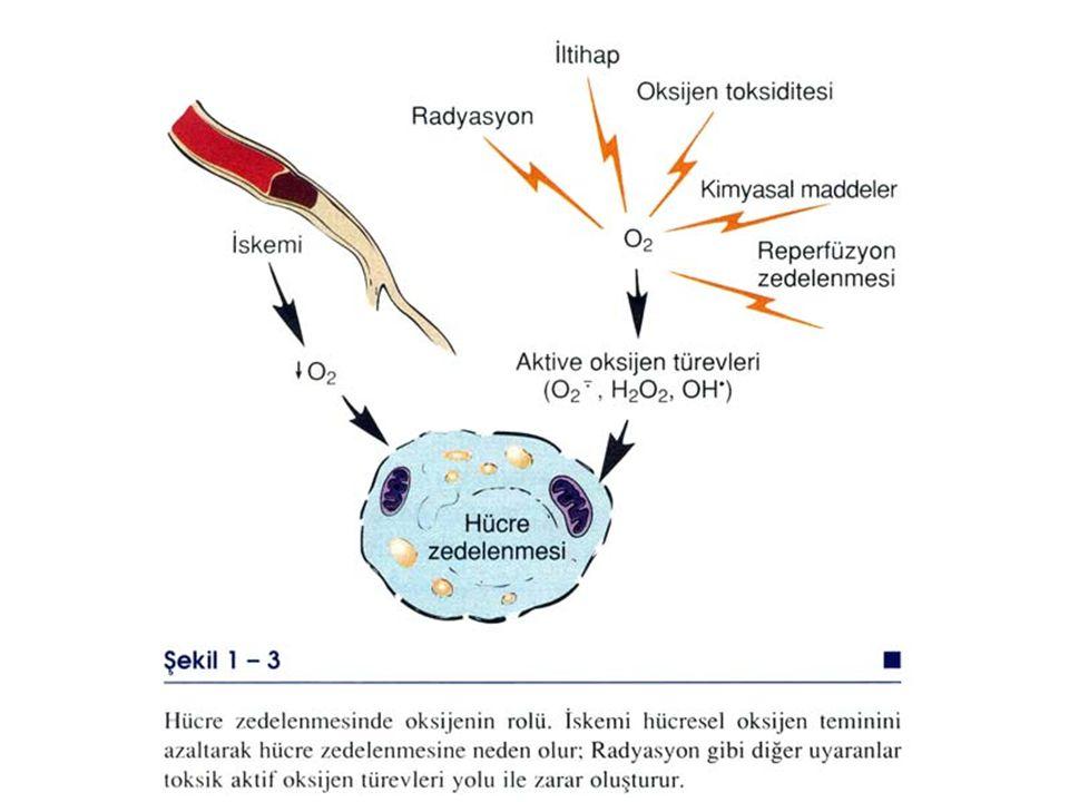Serbest Radikallerin Hi Oluşma Yolları Başlıca sebest radikaller O2 türevleri ( süper oksit, hidrojen peroksit, hidroksil iyonu) ve karbon tetra klorü