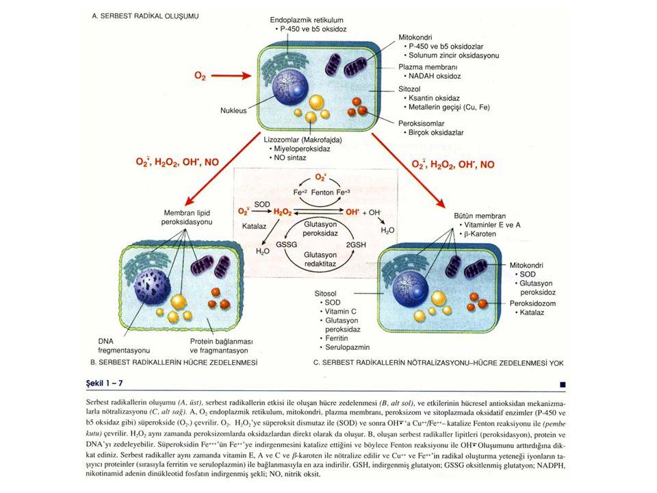 Bu reaksiyonları sonlandıran veya inaktive eden sistemler 2 grupta incelenir 1- Endojen veya ekzojen antioksidanlar  Vitamin E, sistein, glutatyon ve