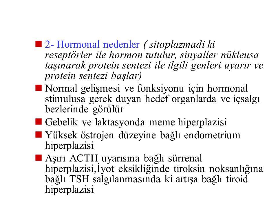 Hiperplazi veya hipertrofi, dengeleyici veya hormonal nedenlere bağlı ob ve fizyolojik veya patolojik olabilir 1- Dengeleyici nedenler: Bir organda ki