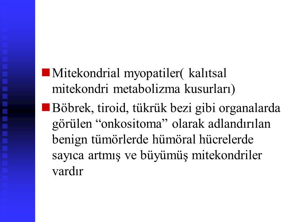 Mitekondrial değişiklikler Mitekondrial fonksiyon bozukluğunun akut hücre zedelenmesi ve ölümünde önemli rolü vardır Letal olmayan bazı patolojik duru