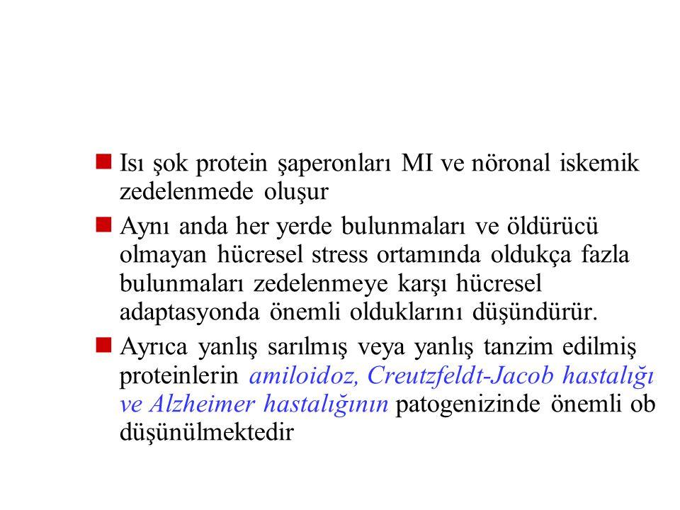 1- Yapısal olarak meydana gelebilir (Hsp 60 ve 90) VEYA 2- Protein birikimi ve denatürasyonuna yol açan hücresel streslerden sonra artabilirler Zedele