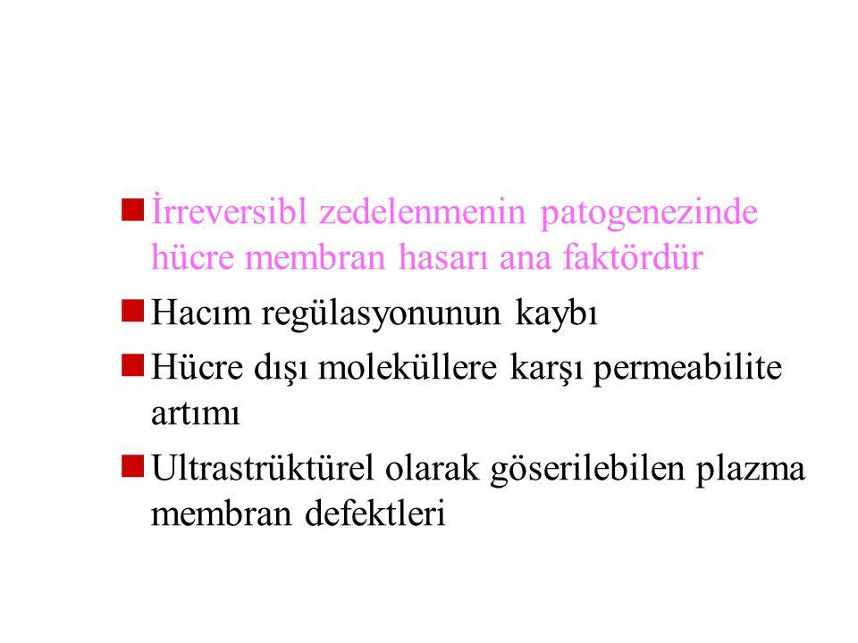 2 olay irreversibiliteden sorumludur  1- Membran fonksiyonlarında ağır hasar  2- Mitekondirilerdeki fonksiyon bozukluğunun düzelememesi Hücre membra