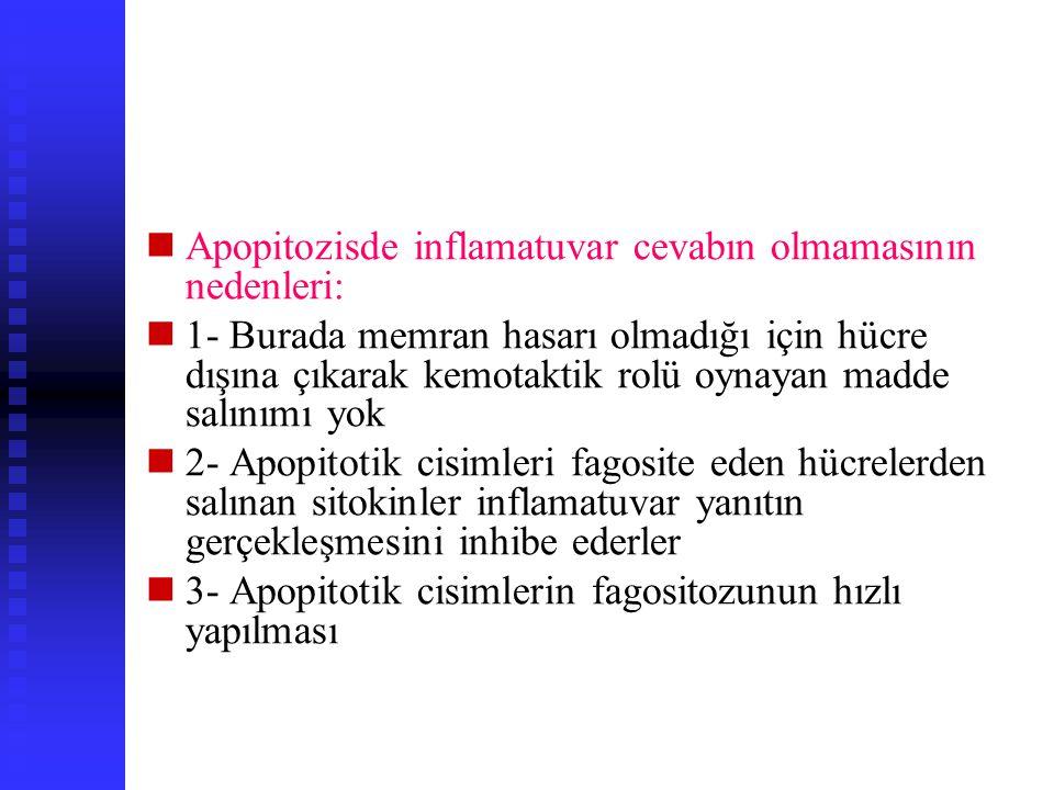 Normalde BCL-2 onkogeni sitokinler ve hormonların neden olduğu apopitozisi inh ederek hücre yaşamını uzatır C-myc onkogeninin protein ürünleri hem apo