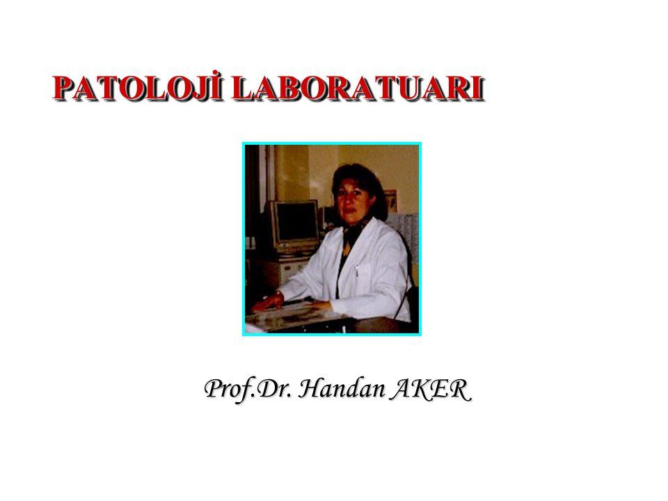 Patoloji: A- Genel (patolojik stimuluslara karşı oluşan temel hücresel ve doku cevaplarını) B- Özel (sistemik, özelleşmiş organların özel cevaplarını)