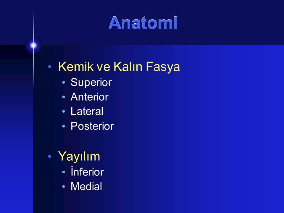 Anatomi Kompartmantalizasyon Som ve Curtin Prestiloid Retrostiloid (Poststiloid) Tensor Vasküler Stiloid fasya