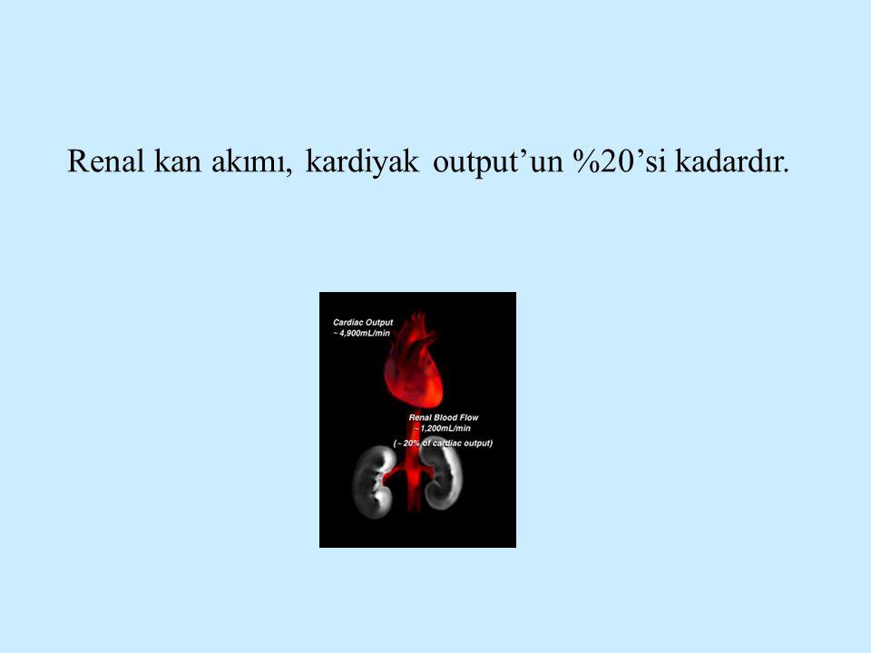 Renal kan akımı, kardiyak output'un %20'si kadardır.