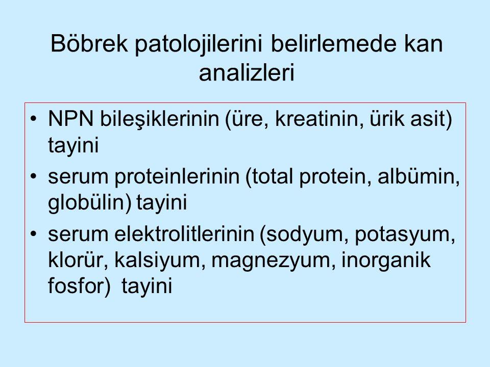 Böbrek patolojilerini belirlemede kan analizleri NPN bileşiklerinin (üre, kreatinin, ürik asit) tayini serum proteinlerinin (total protein, albümin, g