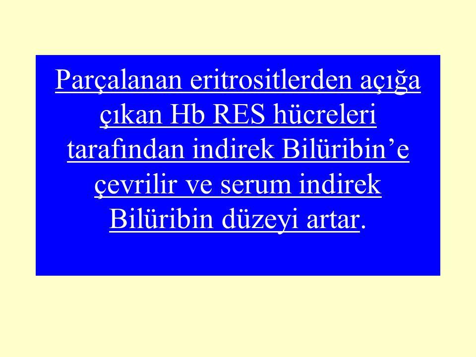 Parçalanan eritrositlerden açığa çıkan Hb RES hücreleri tarafından indirek Bilüribin'e çevrilir ve serum indirek Bilüribin düzeyi artar.
