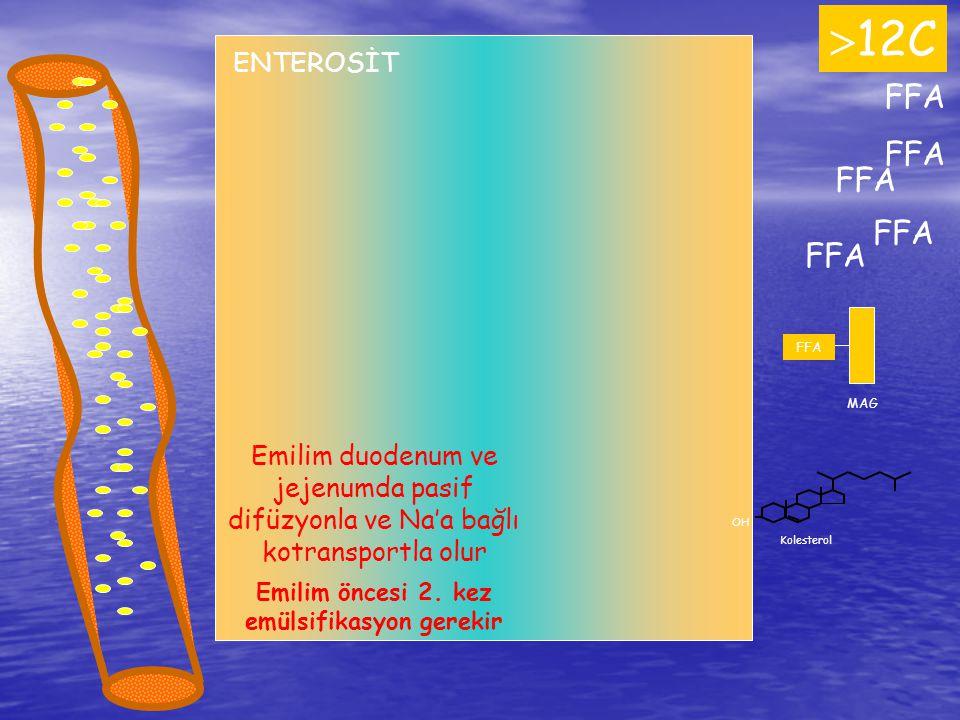 FFA  12C FFA ENTEROSİT FFA MAG OH Kolesterol Emilim duodenum ve jejenumda pasif difüzyonla ve Na'a bağlı kotransportla olur Emilim öncesi 2. kez emül