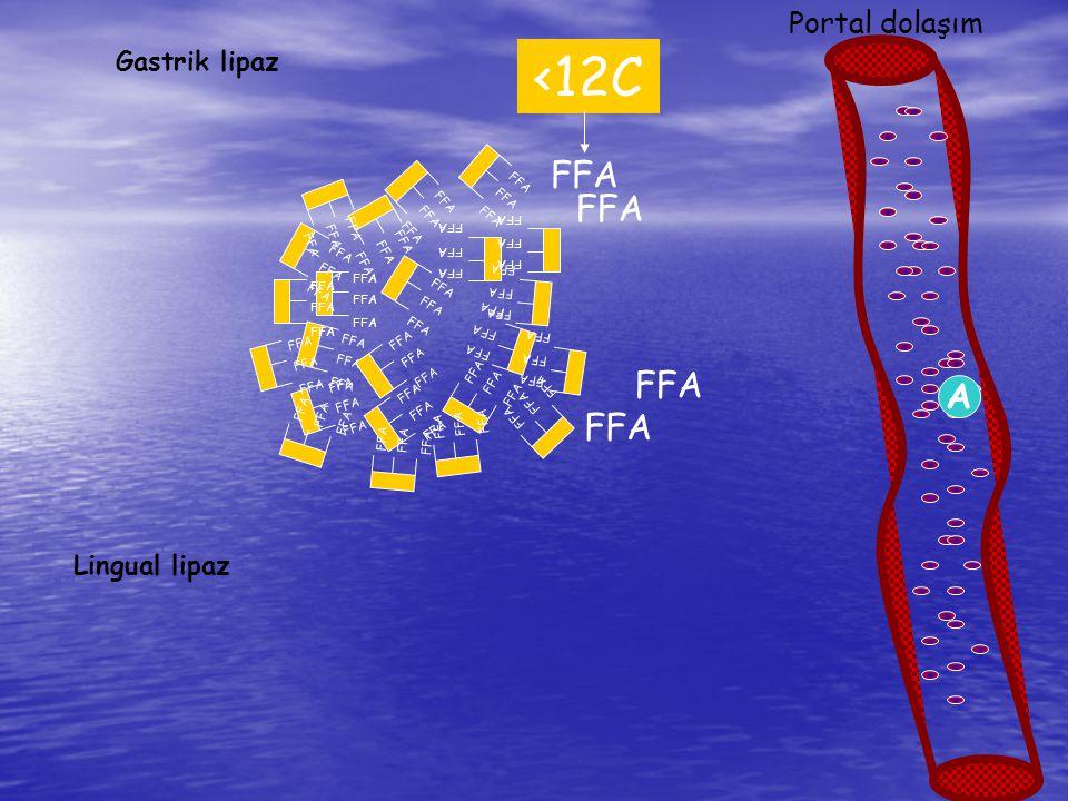 FFA Safra tuzları