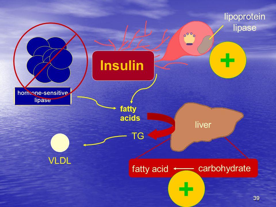 39 fatty acids hormone-sensitive lipase fatty acid carbohydrate liver TG VLDL lipoprotein lipase Insulin + +