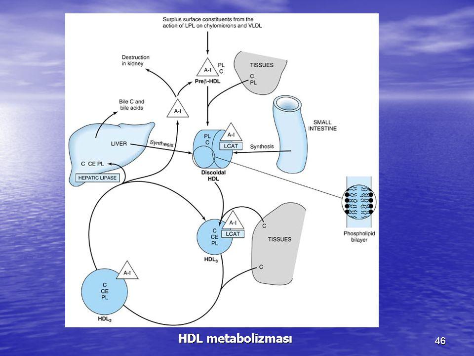 46 HDL metabolizması