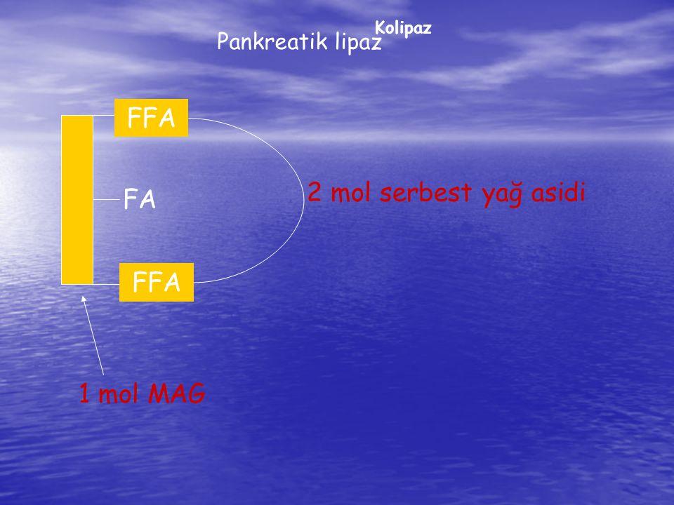 FA Pankreatik lipaz Kolipaz FFA 2 mol serbest yağ asidi 1 mol MAG