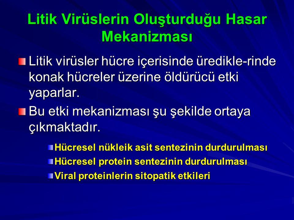 Litik Virüslerin Oluşturduğu Hasar Mekanizması Litik virüsler hücre içerisinde üredikle-rinde konak hücreler üzerine öldürücü etki yaparlar. Bu etki m