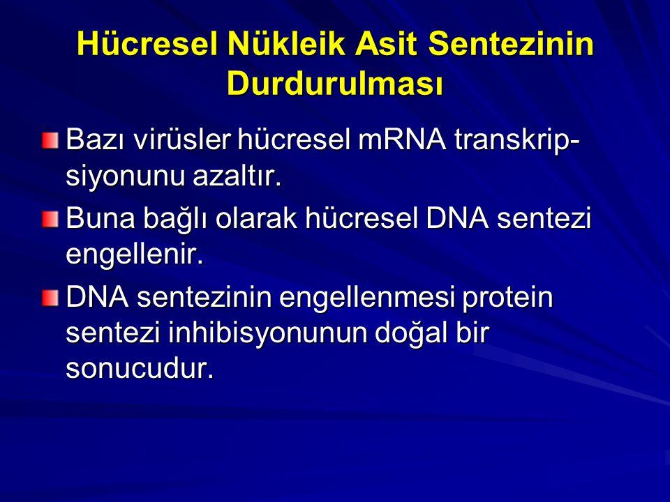 Hücresel Nükleik Asit Sentezinin Durdurulması Bazı virüsler hücresel mRNA transkrip- siyonunu azaltır. Buna bağlı olarak hücresel DNA sentezi engellen