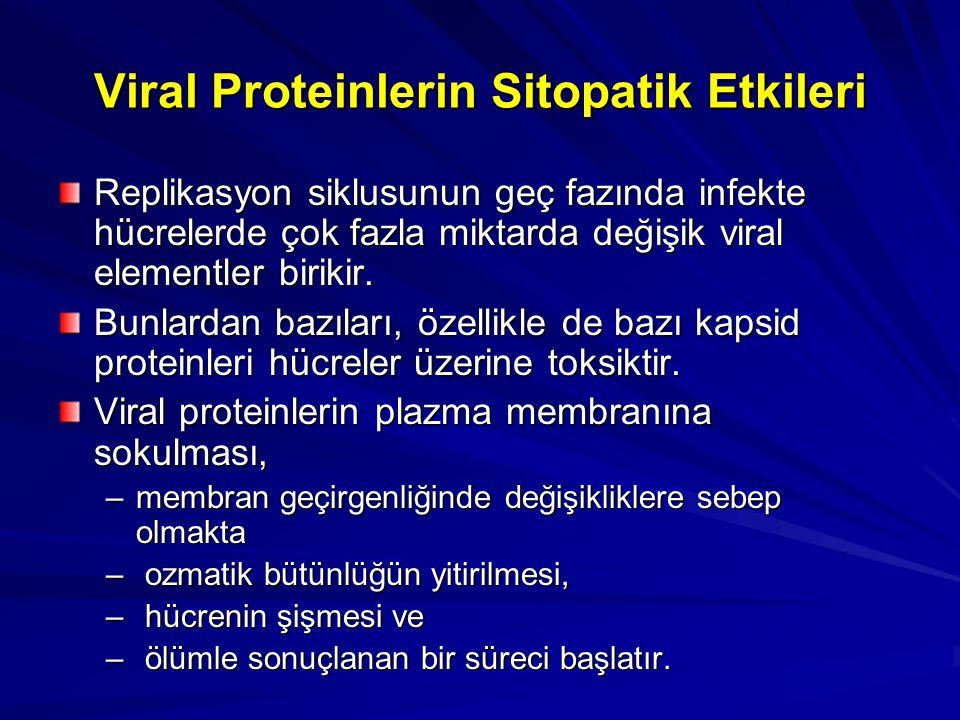 Viral Proteinlerin Sitopatik Etkileri Replikasyon siklusunun geç fazında infekte hücrelerde çok fazla miktarda değişik viral elementler birikir. Bunla