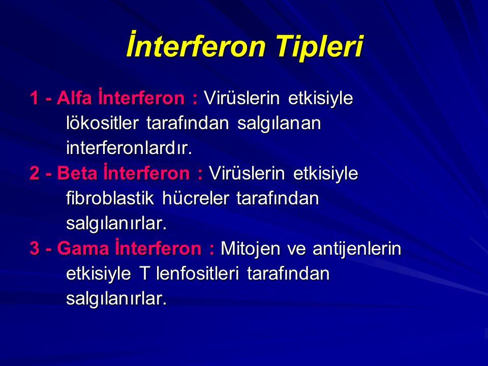 İnterferon Tipleri 1 - Alfa İnterferon : Virüslerin etkisiyle lökositler tarafından salgılanan lökositler tarafından salgılanan interferonlardır. inte