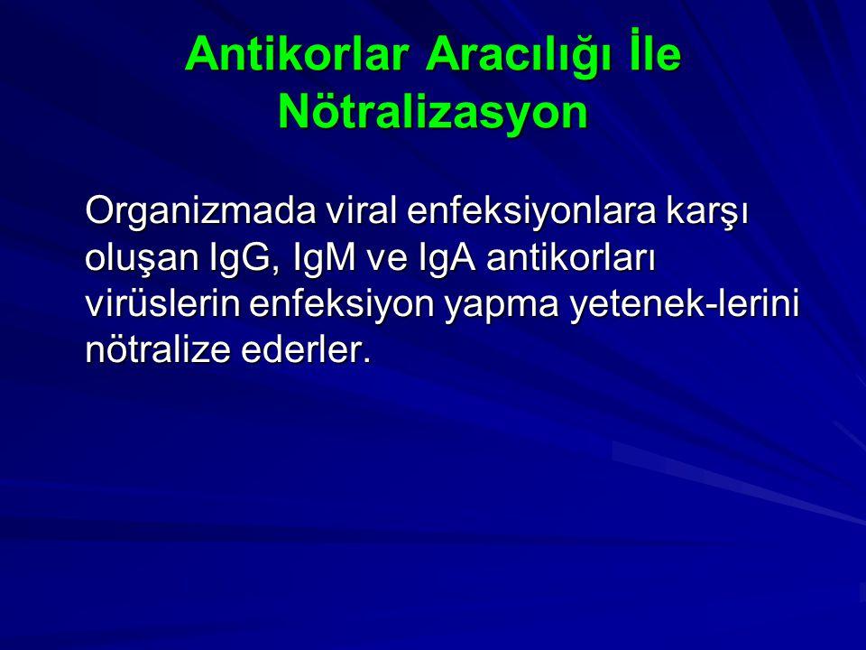 Antikorlar Aracılığı İle Nötralizasyon Organizmada viral enfeksiyonlara karşı oluşan IgG, IgM ve IgA antikorları virüslerin enfeksiyon yapma yetenek-l