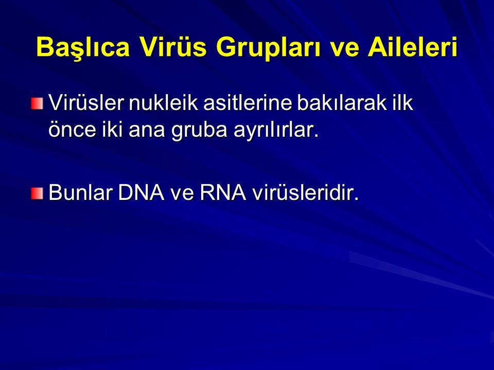 Başlıca Virüs Grupları ve Aileleri Virüsler nukleik asitlerine bakılarak ilk önce iki ana gruba ayrılırlar. Bunlar DNA ve RNA virüsleridir.