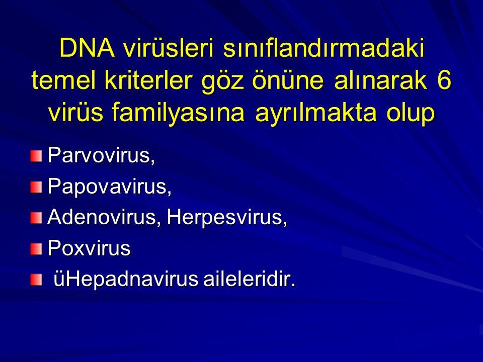 DNA virüsleri sınıflandırmadaki temel kriterler göz önüne alınarak 6 virüs familyasına ayrılmakta olup Parvovirus,Papovavirus, Adenovirus, Herpesvirus