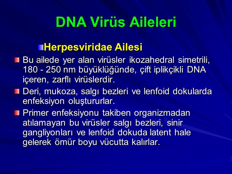 DNA Virüs Aileleri Herpesviridae Ailesi Bu ailede yer alan virüsler ikozahedral simetrili, 180 - 250 nm büyüklüğünde, çift iplikçikli DNA içeren, zarf