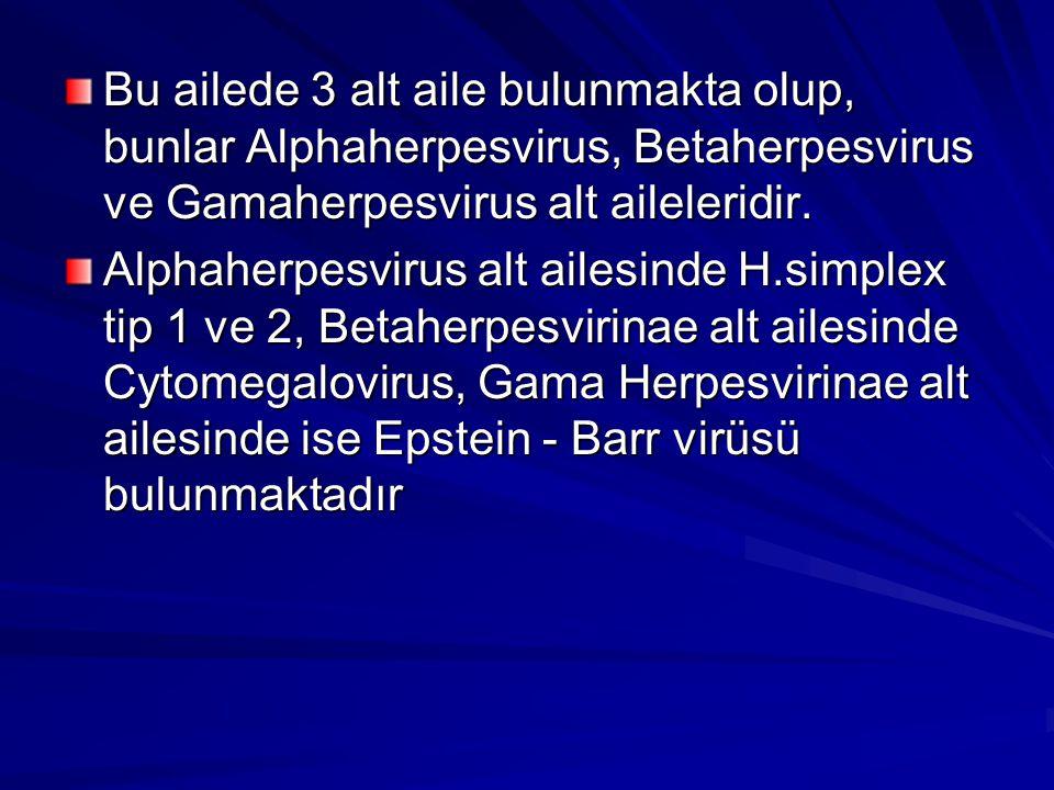 Bu ailede 3 alt aile bulunmakta olup, bunlar Alphaherpesvirus, Betaherpesvirus ve Gamaherpesvirus alt aileleridir. Alphaherpesvirus alt ailesinde H.si