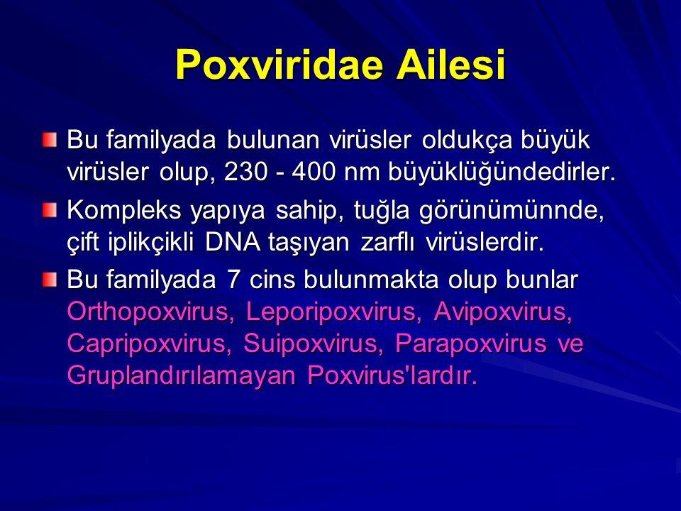 Poxviridae Ailesi Bu familyada bulunan virüsler oldukça büyük virüsler olup, 230 - 400 nm büyüklüğündedirler. Kompleks yapıya sahip, tuğla görünümünnd