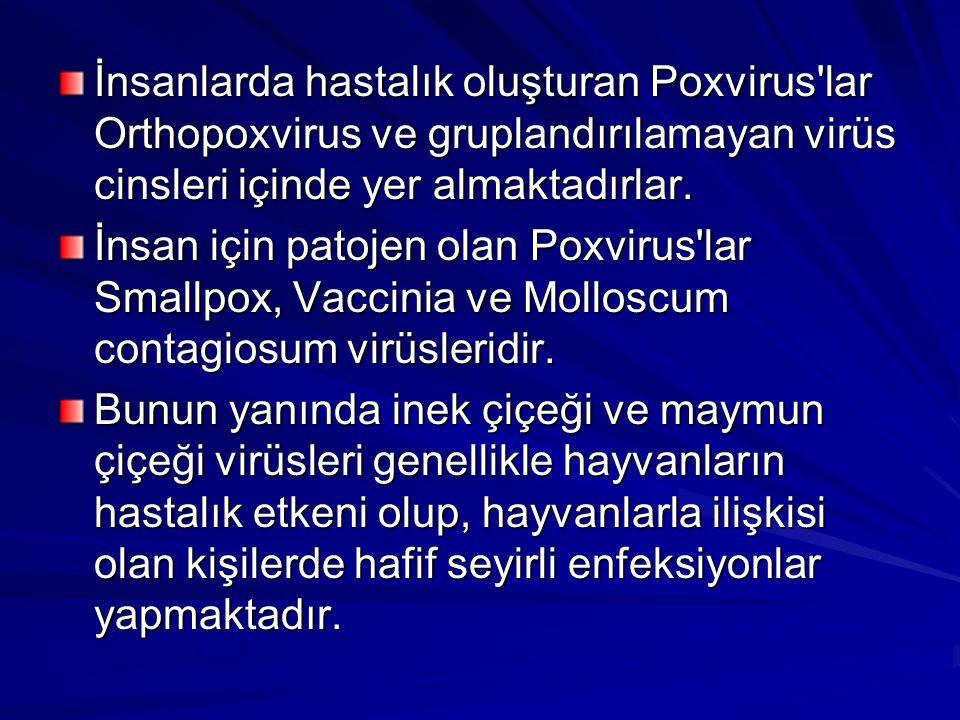 İnsanlarda hastalık oluşturan Poxvirus'lar Orthopoxvirus ve gruplandırılamayan virüs cinsleri içinde yer almaktadırlar. İnsan için patojen olan Poxvir