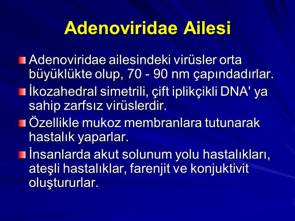 Adenoviridae Ailesi Adenoviridae ailesindeki virüsler orta büyüklükte olup, 70 - 90 nm çapındadırlar. İkozahedral simetrili, çift iplikçikli DNA' ya s
