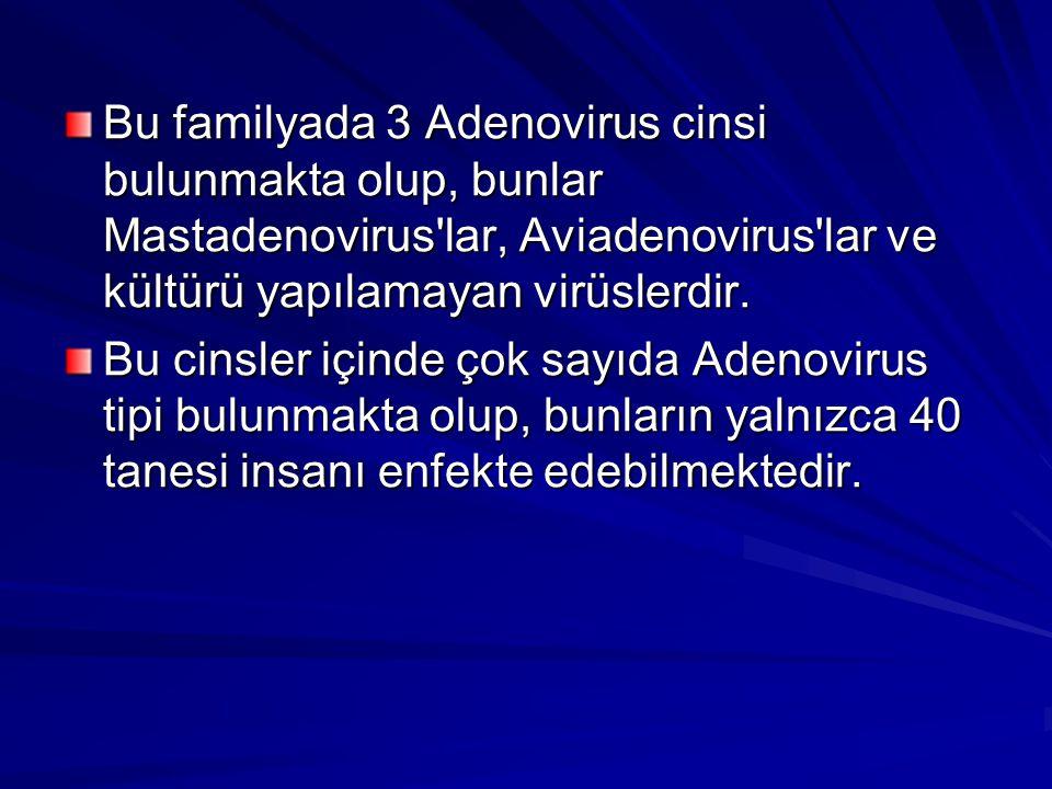 Bu familyada 3 Adenovirus cinsi bulunmakta olup, bunlar Mastadenovirus'lar, Aviadenovirus'lar ve kültürü yapılamayan virüslerdir. Bu cinsler içinde ço