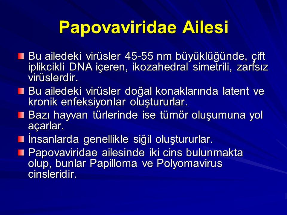 Papovaviridae Ailesi Bu ailedeki virüsler 45-55 nm büyüklüğünde, çift iplikcikli DNA içeren, ikozahedral simetrili, zarfsız virüslerdir. Bu ailedeki v