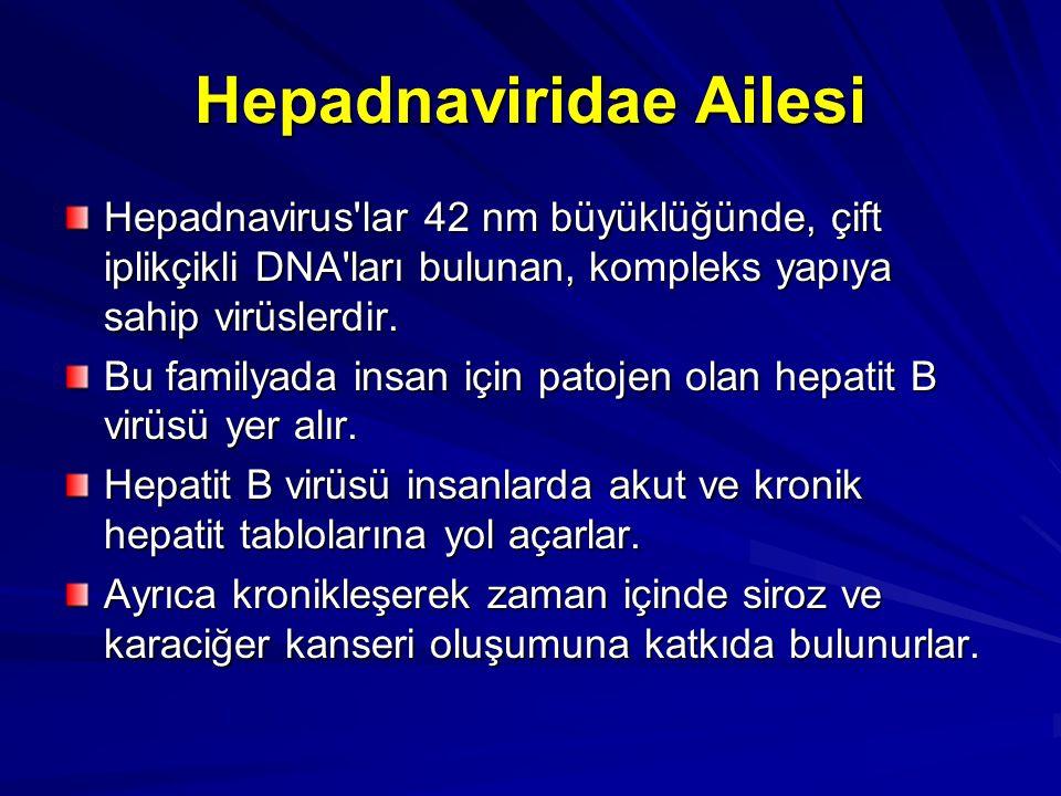 Hepadnaviridae Ailesi Hepadnavirus'lar 42 nm büyüklüğünde, çift iplikçikli DNA'ları bulunan, kompleks yapıya sahip virüslerdir. Bu familyada insan içi