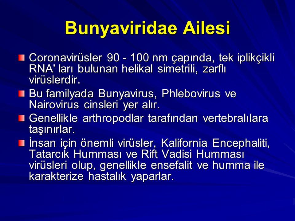 Bunyaviridae Ailesi Coronavirüsler 90 - 100 nm çapında, tek iplikçikli RNA' ları bulunan helikal simetrili, zarflı virüslerdir. Bu familyada Bunyaviru