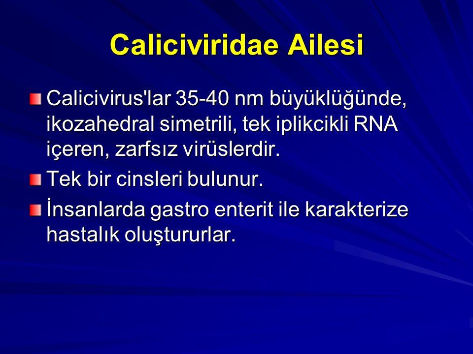 Caliciviridae Ailesi Calicivirus'lar 35-40 nm büyüklüğünde, ikozahedral simetrili, tek iplikcikli RNA içeren, zarfsız virüslerdir. Tek bir cinsleri bu