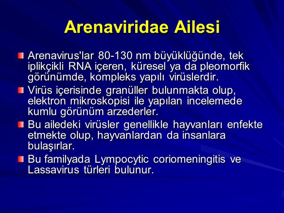 Arenaviridae Ailesi Arenavirus'lar 80-130 nm büyüklüğünde, tek iplikçikli RNA içeren, küresel ya da pleomorfik görünümde, kompleks yapılı virüslerdir.