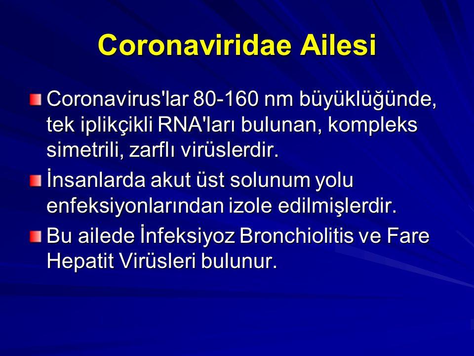Coronaviridae Ailesi Coronavirus'lar 80-160 nm büyüklüğünde, tek iplikçikli RNA'ları bulunan, kompleks simetrili, zarflı virüslerdir. İnsanlarda akut