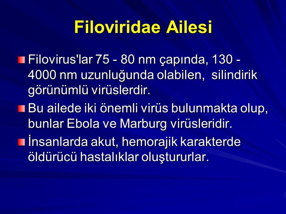 Filoviridae Ailesi Filovirus'lar 75 - 80 nm çapında, 130 - 4000 nm uzunluğunda olabilen, silindirik görünümlü virüslerdir. Bu ailede iki önemli virüs