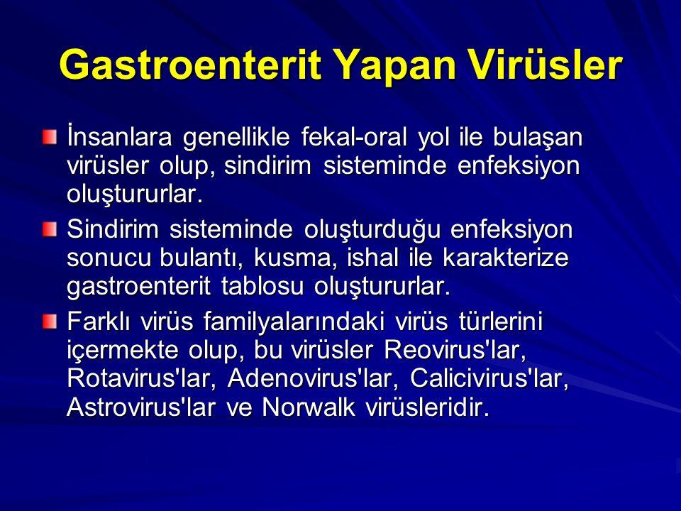Gastroenterit Yapan Virüsler İnsanlara genellikle fekal-oral yol ile bulaşan virüsler olup, sindirim sisteminde enfeksiyon oluştururlar. Sindirim sist