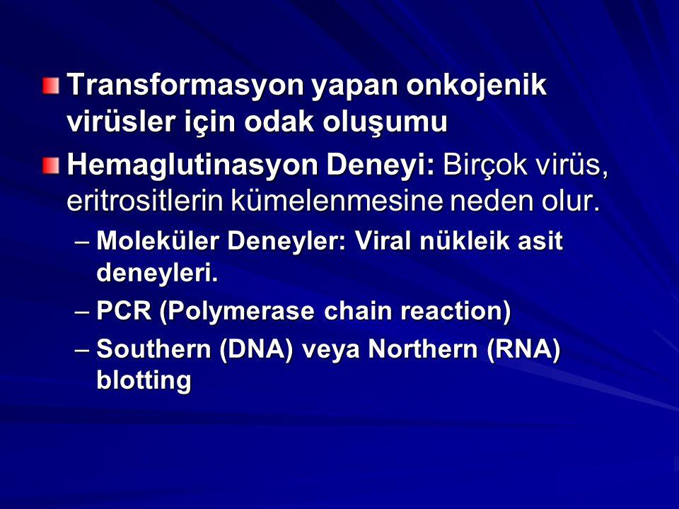 Transformasyon yapan onkojenik virüsler için odak oluşumu Hemaglutinasyon Deneyi: Birçok virüs, eritrositlerin kümelenmesine neden olur. –Moleküler De