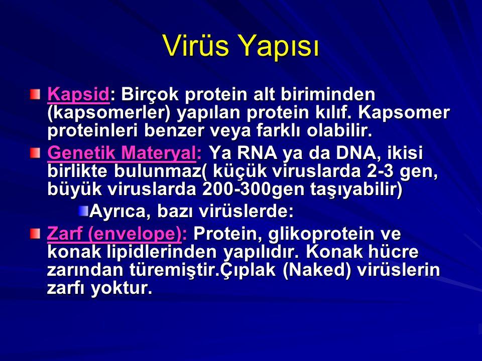 Virüs Yapısı Kapsid: Birçok protein alt biriminden (kapsomerler) yapılan protein kılıf. Kapsomer proteinleri benzer veya farklı olabilir. Genetik Mate