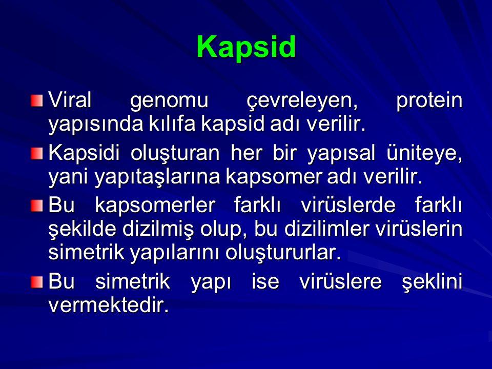 Kapsid Viral genomu çevreleyen, protein yapısında kılıfa kapsid adı verilir. Kapsidi oluşturan her bir yapısal üniteye, yani yapıtaşlarına kapsomer ad