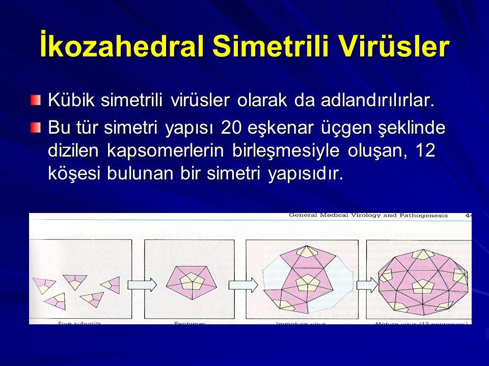 İkozahedral Simetrili Virüsler Kübik simetrili virüsler olarak da adlandırılırlar. Bu tür simetri yapısı 20 eşkenar üçgen şeklinde dizilen kapsomerler