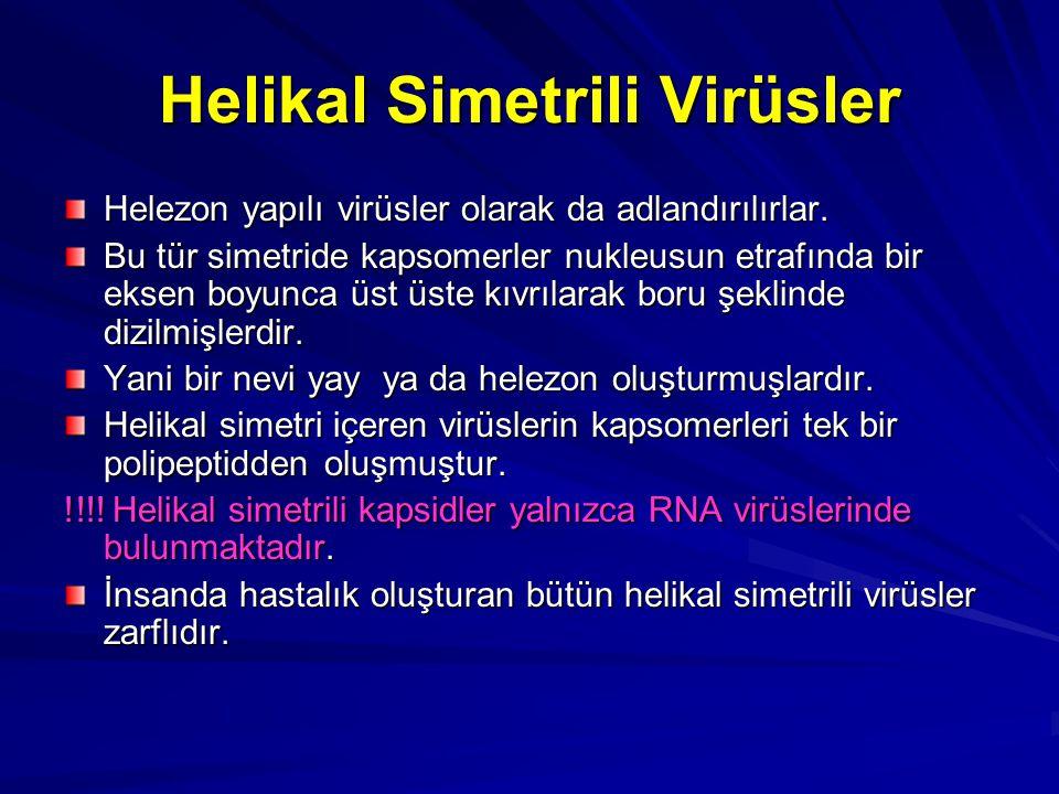 Helikal Simetrili Virüsler Helezon yapılı virüsler olarak da adlandırılırlar. Bu tür simetride kapsomerler nukleusun etrafında bir eksen boyunca üst ü