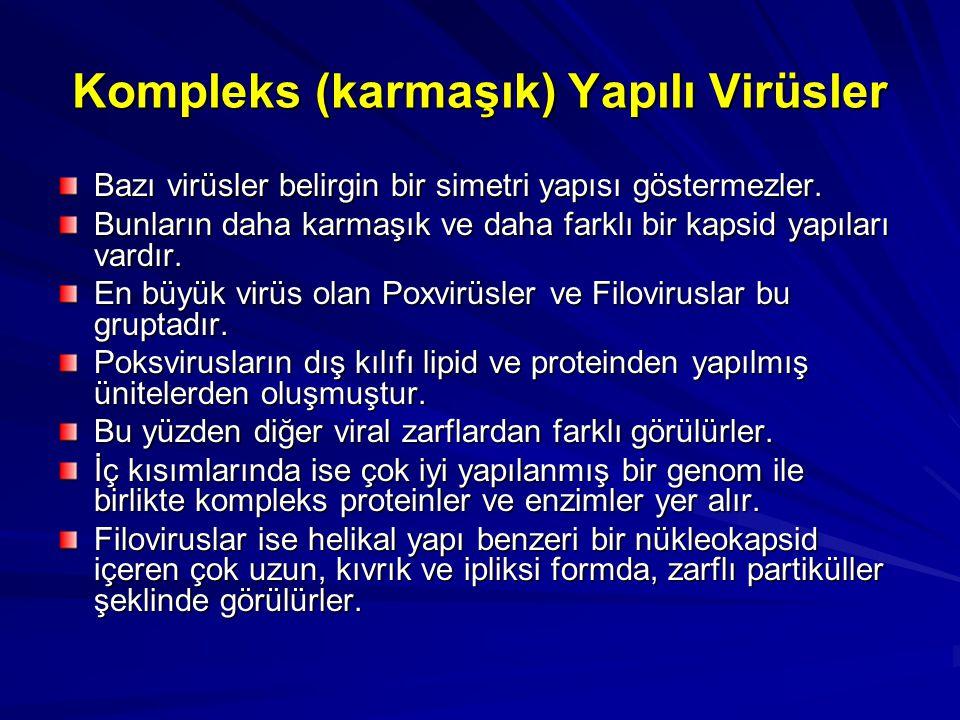 Kompleks (karmaşık) Yapılı Virüsler Bazı virüsler belirgin bir simetri yapısı göstermezler. Bunların daha karmaşık ve daha farklı bir kapsid yapıları