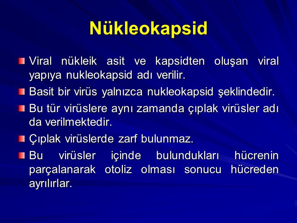 Nükleokapsid Viral nükleik asit ve kapsidten oluşan viral yapıya nukleokapsid adı verilir. Basit bir virüs yalnızca nukleokapsid şeklindedir. Bu tür v
