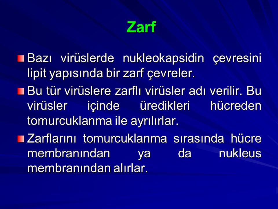 Zarf Zarf Bazı virüslerde nukleokapsidin çevresini lipit yapısında bir zarf çevreler. Bu tür virüslere zarflı virüsler adı verilir. Bu virüsler içinde