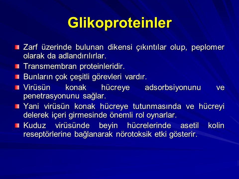 Glikoproteinler Zarf üzerinde bulunan dikensi çıkıntılar olup, peplomer olarak da adlandırılırlar. Transmembran proteinleridir. Bunların çok çeşitli g